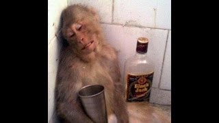 Drunken animals - Пьяные животные