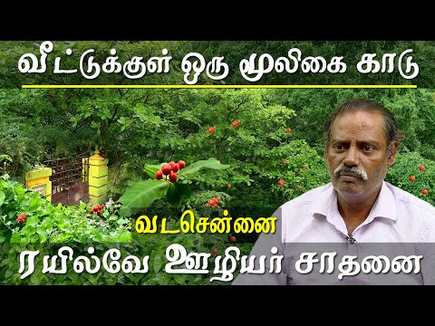 agriculture and organic farming chennai herbal forest - rare herbs of tamil nadu under one house