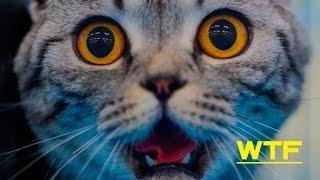 ПРИКОЛЫ С КОТАМИ.КОШКИ И ОГУРЦЫ.Подборка приколов#4|Смешные коты
