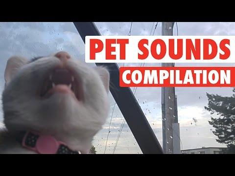 Most Hilarious Pet Sounds || Funniest Animal Sounds