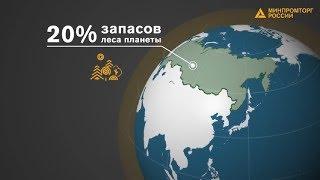 Лесопромышленный комплекс России: реалии и перспективы