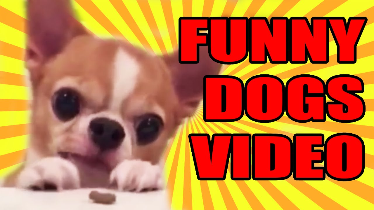 Funny Dog Video Compilation! VERY FUNNY!