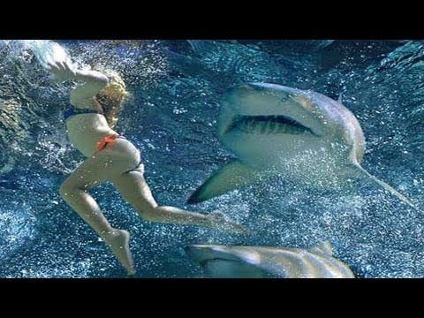 Shark Attack Experiment Live Videos Online  National Geographic Channel  Sub Saharan Africa