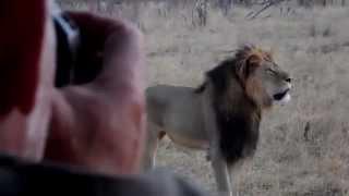 Cecil - Africa