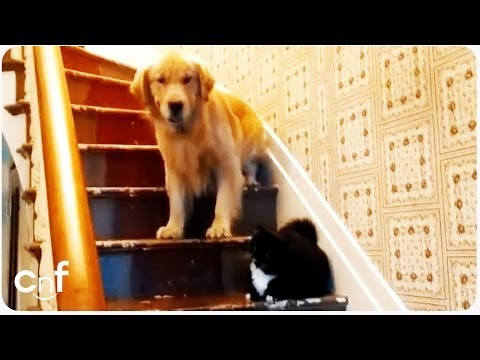 Dog Afraid of 'You Shall Not Pass' Cat | Furry Gandalf