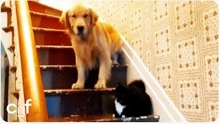 "Dog Afraid of ""You Shall Not Pass"" Cat 