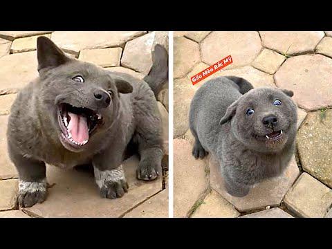 Dieses unglaubliche Tier ähnelt einem Hund und einer Katze!