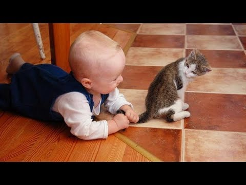 FUNNY Babies Pulls Cat's Tail | Cats Love Babies Compilation