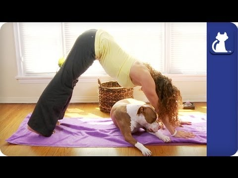 yoga with your dog  downward dog  upward dog with your
