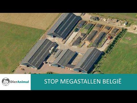 DierAnimal - Stop Megastallen België