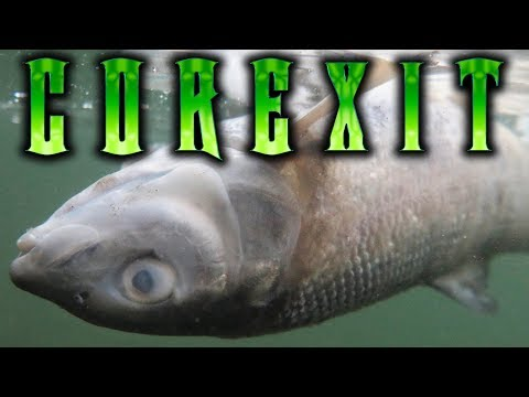 The Truth about COREXIT   Oil Spill Dispersants & BP Oil ▶️️