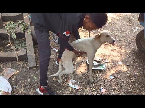 Sweetest street dog walks again after accident