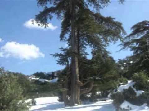 0fa5a6867ff82 جبال الشلعلع بحلة بيضاء - عروس الاوراس - YouTube