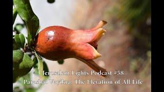 Jerusalem Lights Podcast #58 - Parashat Vayikra: The Elevation of All Life