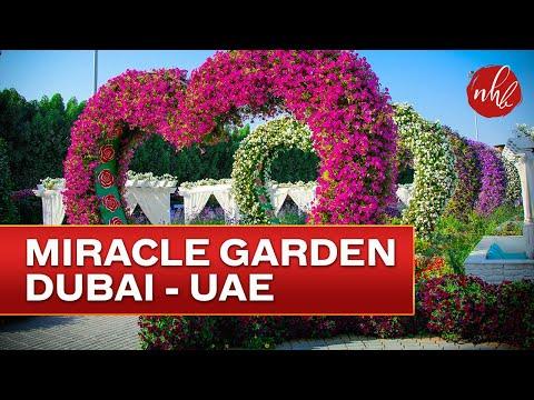 Worlds Largest Garden  |  Dubai Miracle Garden  2017