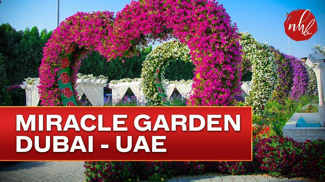 worlds largest garden dubai miracle garden 2017 youtube