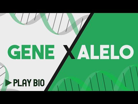 Gene x alelo