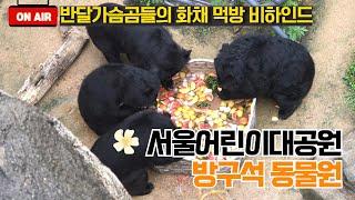 서울어린이대공원 방구석동물원 - 반달가슴곰편썸네일