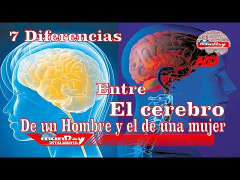 7 diferencias entre el cerebro del hombre y la mujer