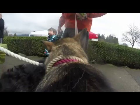 2016 RunGo Dash For Dogs