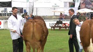 Pencampwriaeth Tarw Ifanc Cyfandirol rh2 | Junior Continental Bull pt2