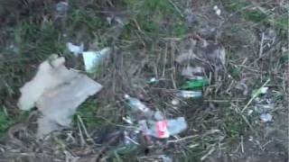 Гатчина. Шприцы, наркоманы и мусор.