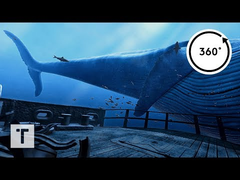 the Blu: Whale