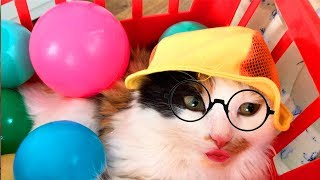 Лиза и игривый котенок  | Видео для детей