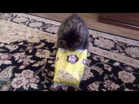 """Игрушка для кошки - """"кот в мешке"""""""