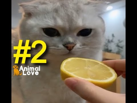 Funniest Cats 😻 – Awesome Funny Pet Animals Videos #2
