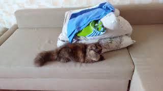 Кошка помогает убирать постель