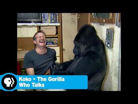 Trailer do filme Koko: A Talking Gorilla