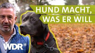 Von Missverständnissen zwischen Hund und Halter | Hunde verstehen  (4) | Tierratgeber | WDR