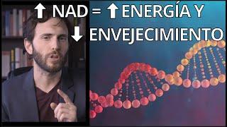 NAD: la molécula clave para LONGEVIDAD (retrasa tu ENVEJECIMIENTO)