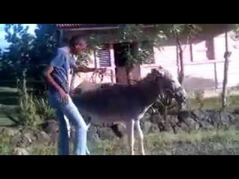 порно людей с животными - lenag-