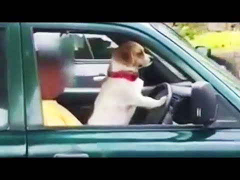 Funny and Cute Dogs Playing 😂 [Funny Pets]
