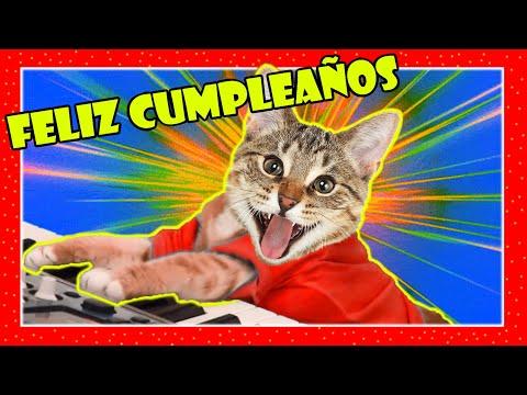 FELIZ CUMPLEA�OS 2019 GATOS maullando GATOS maullandonumero 1 para felicitar [TODO RISAS]