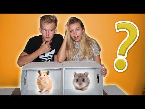 GRYZONIE ATAKUJĄ!🐹 Co jest w pudełku? #3