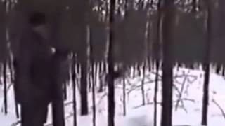 Охота на медведя с берлоги это не охота а УБИЙСТВО  YouTube