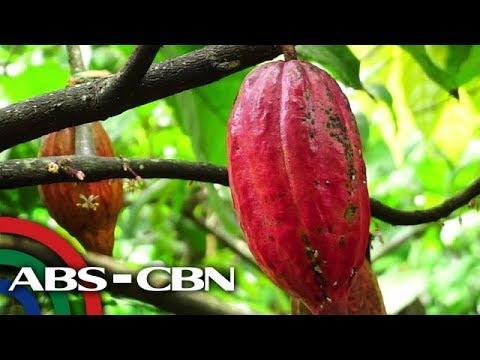 Salamat Dok: Cacao Farm | Okay Eco