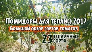Помидоры для теплиц 2017! Большой обзор сортов томатов