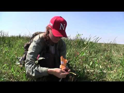 Heidi Hillhouse: Applied Ecology in the Rainwater Basin