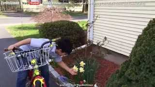 Planting Red & Pink Double Knockout Rose Part 5: A Week Later - Tulips Daffodils & Oh Deer!!!