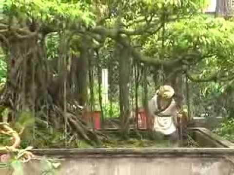 Phóng sự cây cảnh Hưng Đạo- Hải Tây- Hải Hậu