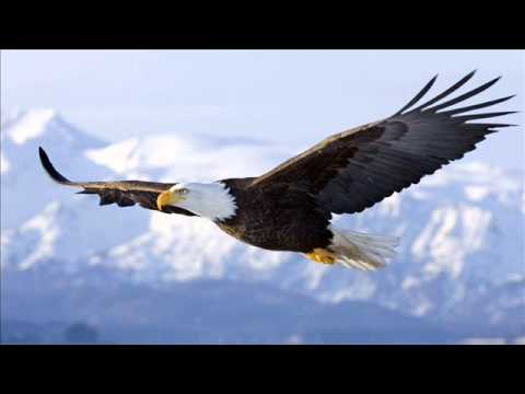 What does Eagle dreams mean?