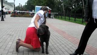 Витебск, Региональная выставка собак всех пород 21.08.2011