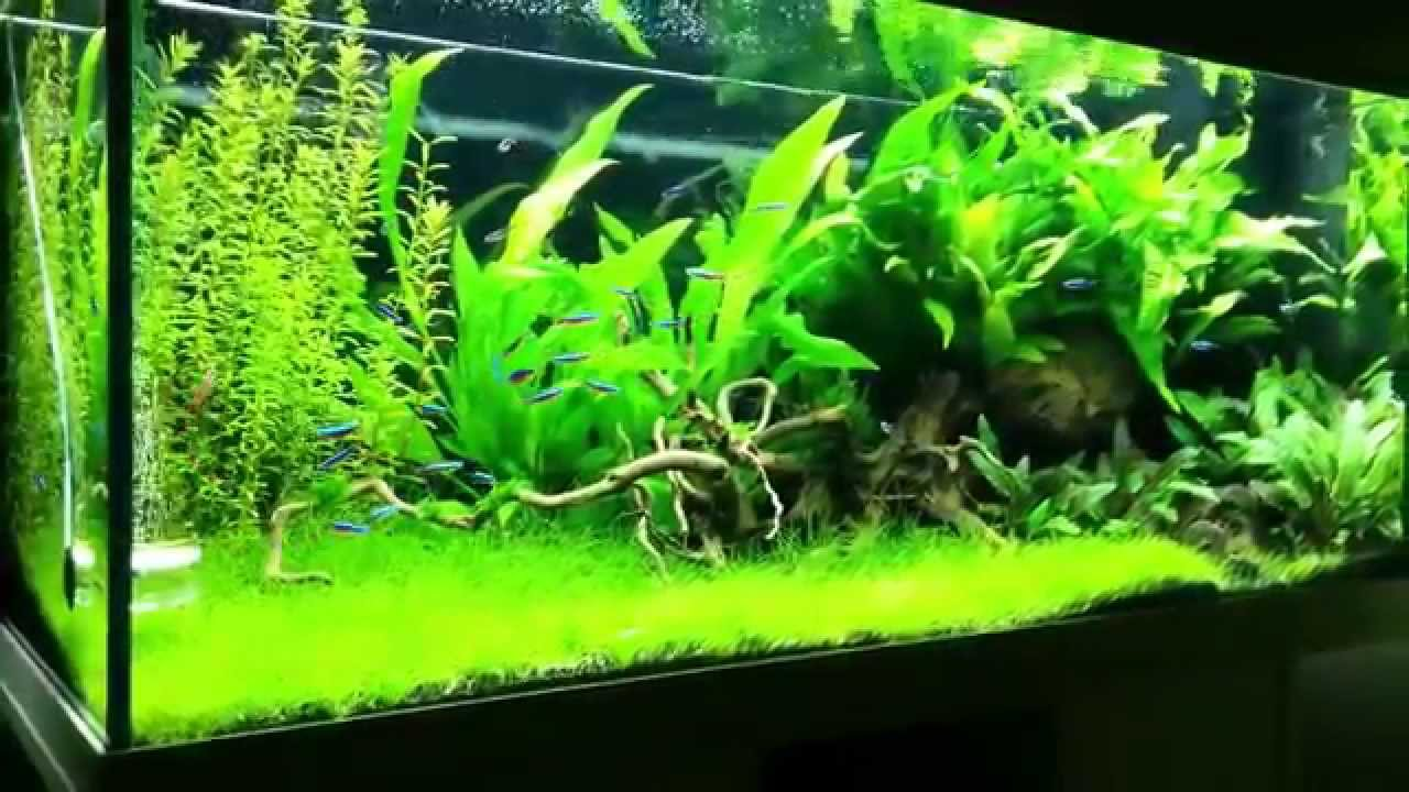 juwel rio 180 planted tank update youtube. Black Bedroom Furniture Sets. Home Design Ideas