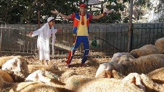 عمو صابر وخروف العيد  Amo Saber And sheep