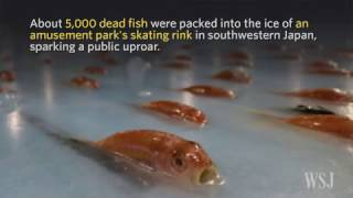 Japan Theme Park's Frozen-Fish Skating Rink Gets Icy Reception