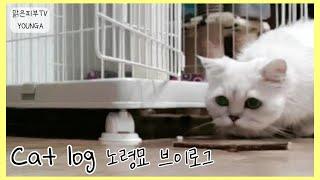 조금 느려도 괜찮아♡ 16살  페르시안 친칠라 고양이 …